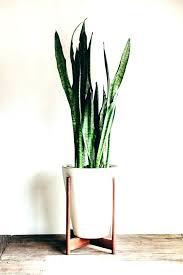 best indoor office plants. Cool Office Plants Best Indoor Desk Looking Case For Sale Durban .