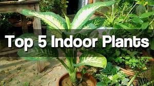 Top 5 Best Indoor Plants   Easy To Grow Indoor Plants   (Urdu Hindi)
