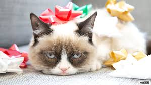grumpy cat clipart desktop background 14