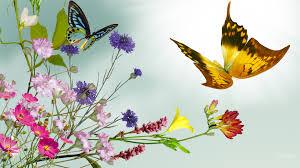 Resultado de imagem para borboletas amarelas primavera