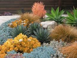 Small Picture Drought Tolerant Garden Design California Drought Tolerant Garden