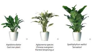 office plants no light. Indoor Plants No Light Simple Untitled 24 Competent Interior Plantscaping With Medium Office E