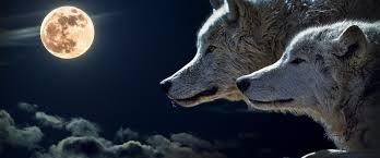 Wolf 4K Wallpaper #14