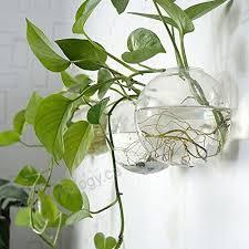 6 pcs wall hanging planters round glass