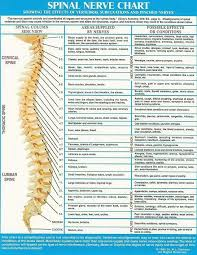Pin On Spine