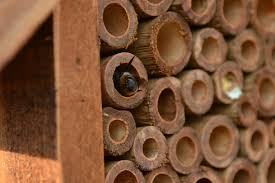 why build a bee house
