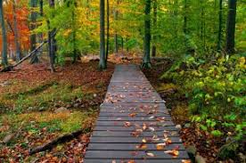 fall nature backgrounds. Fall-nature-backgrounds-21319-hd-wallpapers Fall Nature Backgrounds D