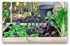 Small Picture Vegetable Garden Irrigation How Much and How Often