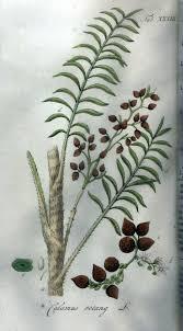 Hasil hutan non kayu terdiri dari produk nabati dan hewan. Rotan Wikipedia Bahasa Indonesia Ensiklopedia Bebas