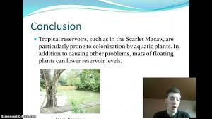 water pollution conclusion uf