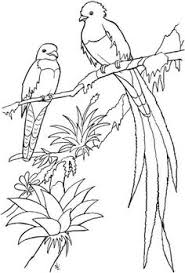Small Picture Printable advanced Bird Coloring Pages for Adults free Enjoy