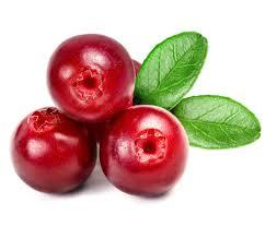 """Résultat de recherche d'images pour """"cranberry"""""""