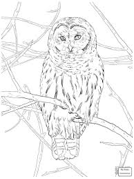 Small Picture coloring pages owls birds Flying Barn Owl colorpages7com