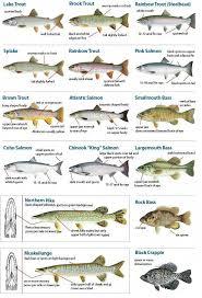 Know Your Fish Michigan Fishing Guide Eregulations
