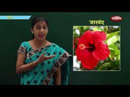 Flowers In Marathi Learn Marathi For Kids Marathi For Beginners