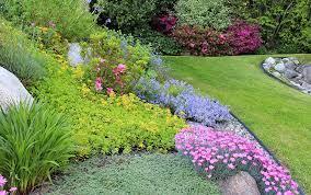 best ground cover plants david domoney