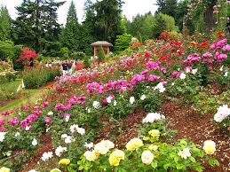 portland parks recreation the international rose test garden in washington park in portlan