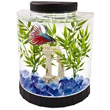 betta fish tanks. Fine Tanks Tetra LED Half Moon Betta Aquarium 46 X 91 99 Inches Inside Fish Tanks Amazoncom