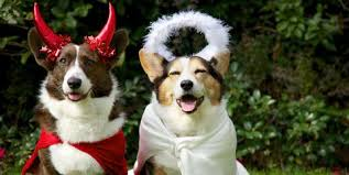 10 Adorable Halloween Costume Ideas For Your Dog