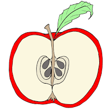 apple fruit clip art. parts of an apple clipart fruit clip art