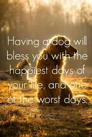 Dog Death Quotes 77 Best Pin By CC R On Doyle My Best Friend Pinterest Rainbow Bridge