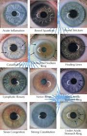 Reading Health Chart Online Iridology Reading Process Step And Cost Iriscope