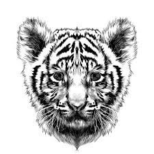 white tiger cubs drawing. Delighful Drawing Tiger Cub Head Sketch Vector Graphics Black And White Drawing Stock Vector   80874538 Intended White Tiger Cubs Drawing 123RFcom