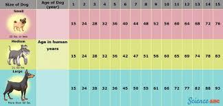 Dog Years To Human Years Does 1 Dog Year Equal 7 Human Years