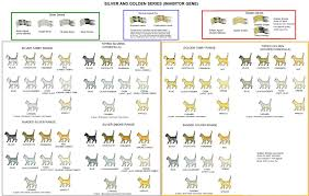 Uncommon Maine Coon Color Chart Maine Coon Height