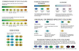 Cat Color Chart Cat Eye Colors Why Cats Eyes Changing Colors Happy Cats