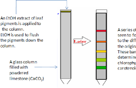 Figure 1 From Chapter 1 Ion Exchange Chromatography An