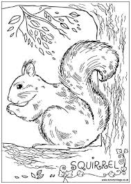 Small Picture Squirrel Colouring Page