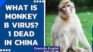 Monkey B Virus claims its first victim in China| What are the symptoms and  causes| Oneindia News - video Dailymotion