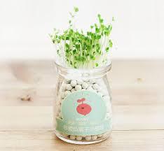 office desktop planting creative gardening glass container mini flower bonsai pot succulent plants hear beautifying office bonsai grass pots planters mini