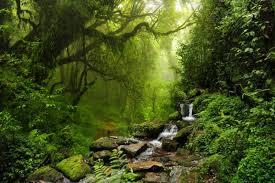 Resultado de imagen para ecosistemas naturales