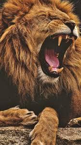 Lion Roaring Wallpaper Iphone (#2446934 ...