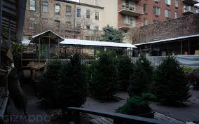 photo essay nyc s incredible christmas tree seller subculture photo essay nyc s incredible christmas tree seller subculture