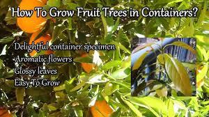 233 Best Fruit Trees Images On Pinterest  Fruit Trees Garden Pots For Fruit Trees