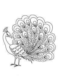 Peacock Coloring Pages Getcoloringpagescom