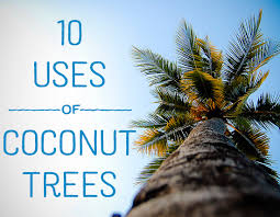 uses of coconut trees hubpages