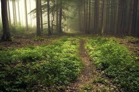 forest floor bedding forest floor forest floor in fog by forest floor texture forest floor zoomed forest floor bedding