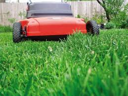 Cutting Your Grass To the Proper Height