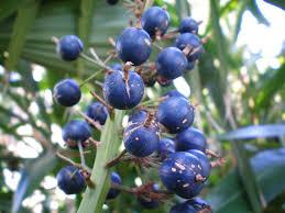 Fruit Trees  EBayLotus Fruit Tree