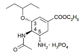 Tamiflu Oseltamivir Phosphate Side Effects Interactions