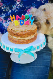 Dog Birthday Cake Recipe For Your Furry Friend Bigger Bolder Baking