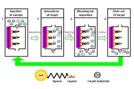 Hplc Principle Principle Of Affinity Chromatography Shodex Hplc Columns