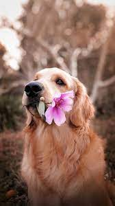Dog Wallpapers: Free HD Download [500+ ...