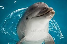 """Attēlu rezultāti vaicājumam """"delfinu šovs klaipēdā"""""""