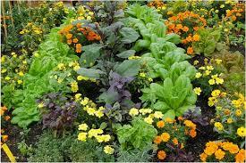 Image result for organic garden