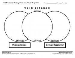 Photosynthesis Pdf Free Download